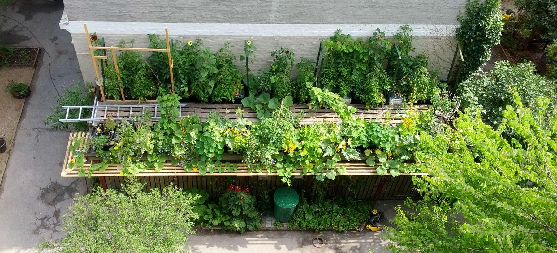 Frø à la TagTomat - så-kalender og valg af frø