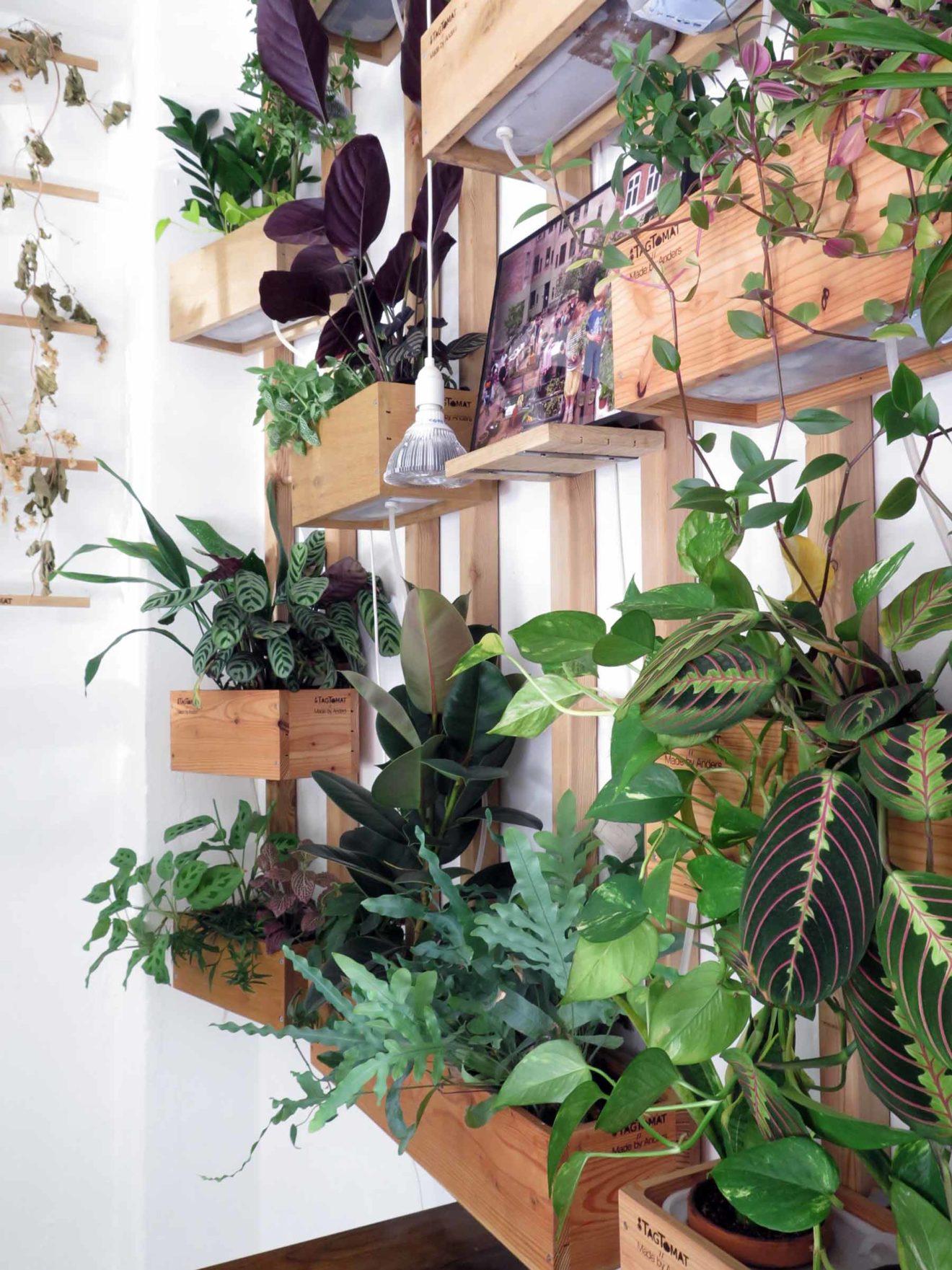 Luftrensende kontorplanter som grøn plantevæg i vores showroom
