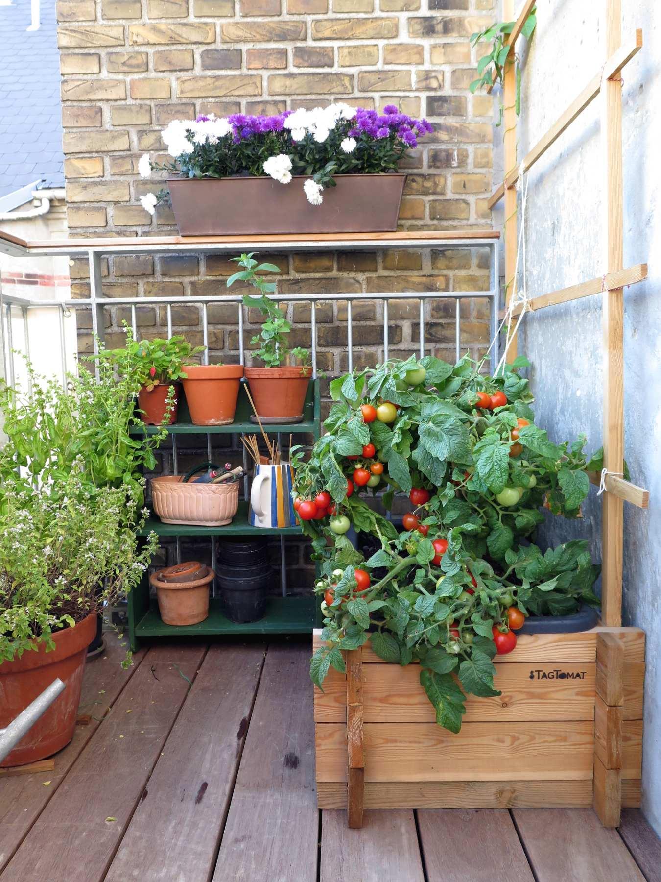 Plantevalg til din altan