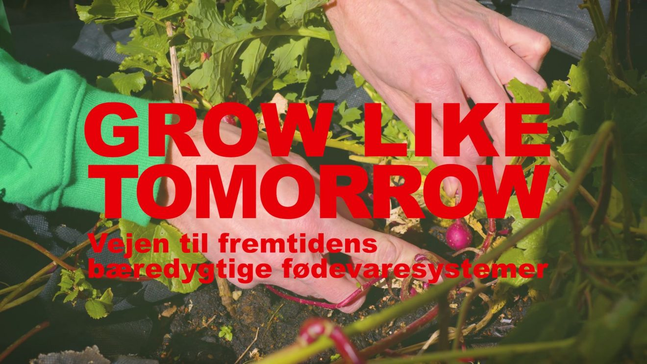Grow Like Tomorrow - coverbillede