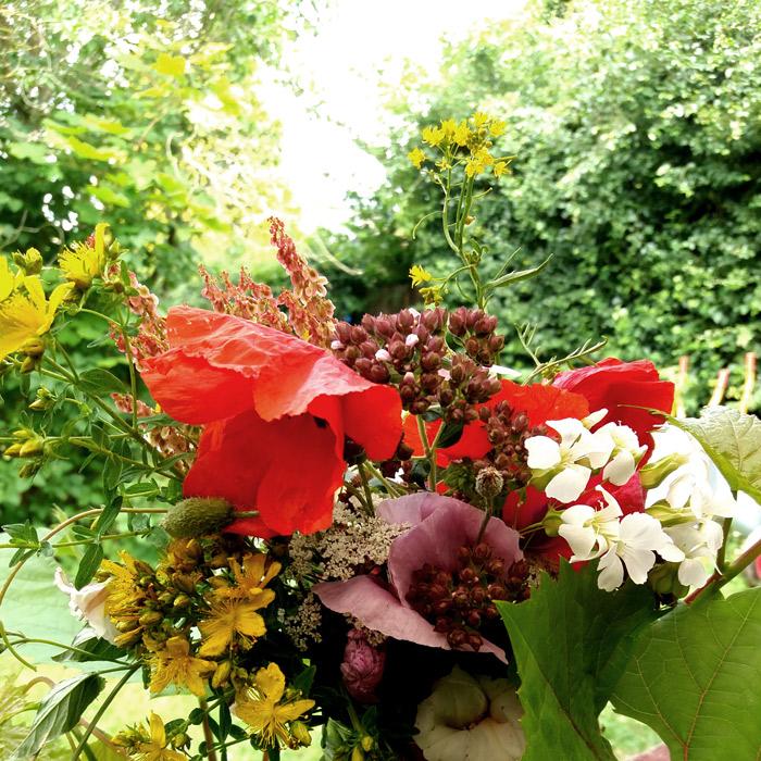 TagTomat-underkategori-Frø-blomsterfrø_700px_web
